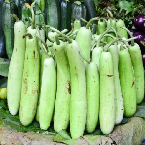 Opo - Extra Long Bottle Gourd - 5 seeds